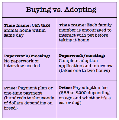 Adopting A Dog Vs Buying From A Breeder